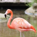 Flamingo the …