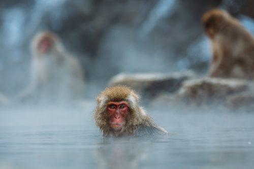 温泉につかるサル